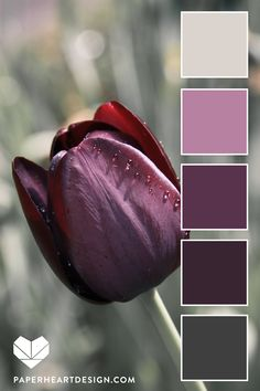 Deep Purple Tulip Color Palette – 12 Stunning Flower Inspired Color Schemes Flowers are the best color inspiration! Color Schemes Colour Palettes, Colour Pallette, Color Palate, Color Combos, Purple Color Schemes, Purple Palette, Seeds Color Palettes, Best Color Combinations, Purple Colors