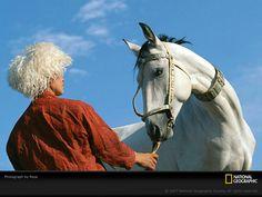 White Ahal-Teke horse