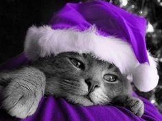 Purple Santa Kitty - Click for More...