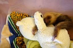 Sloth naps are the best naps. | 61 Things I Learned At The World's Most Important Sloth Sanctuary