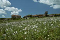 Sardegna Vineyard, My Photos, Album, Mountains, Nature, Travel, Outdoor, Outdoors, Naturaleza