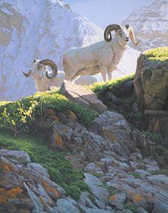 The Mountaineers - Dall sheep painting by Derek C. Wicks