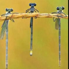 So this dragonfly flies upto this bar...lol awesome shot!