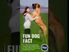 Fun Dog Fact Dog Facts, Fun Dog, Online Pet Supplies, Best Dogs, Pets, Animals And Pets