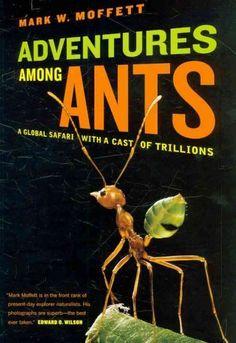 Listen: Ant expert Mark Moffett talks about studying ants around the world. Present Day, Safari, Around The Worlds, It Cast, Author, Adventure, Books, Brain Food, Libros
