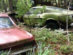 abandoned cars  two classic Ford Mustangs - one green one rusty brown