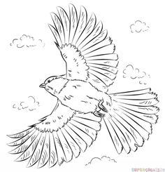 How to draw a chickadee in flight step by step. Drawing tutorials for kids and beginners.