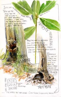 South Carolina Low Country Nature Journaling and A. South Carolina Low Country Nature Journaling and Art: A Walk in the Woods. Sketch Journal, Artist Journal, Journal Art, Garden Journal, Nature Journal, Sketchbook Inspiration, Art Sketchbook, Botanical Art, Botanical Illustration