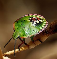 Beetle-Green with spots!