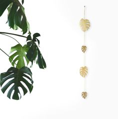 """MONSTERA DELICIOSA (SPLIT LEAF PHILODENDRON)  Brass, brass wire.  Measures 2'4"""" in length  Your hanging vine will arrive in bright and shiny condition, but it is in  the nature of brass to oxidize and develop a patina over time. The rate of  this change depends on your climate. To slow"""