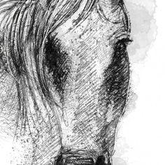 Fine Art Drawing, Art Drawings, Connemara Pony, Sketch A Day, Shop Art, Surface Design, Uk Shop, Giclee Print, How To Draw Hands