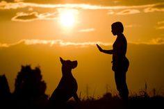 What Is Clicker Training? | Karen Pryor Clicker Training