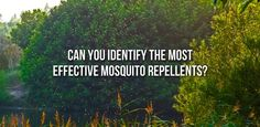 Can You Identify The Most Effective Mosquito Repellents? http://vitchelo.com/news/effective-mosquito-repellents/?utm_campaign=coschedule&utm_source=pinterest&utm_medium=VITCHELO%C2%AE&utm_content=Can%20You%20Identify%20The%20Most%20Effective%20Mosquito%20Repellents%3F