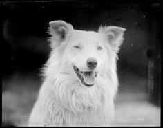 Dog by Boston Public Library, via Flickr