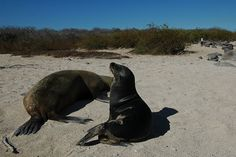 Just a couple of sea lions catching some rays! The creatures we see on Galapagos Dive Trips are incredible.
