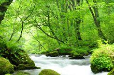 十和田湖から流れ出る奥入瀬川の渓流地域。 空気がおいしく、マイナスイオンがたっぷり出ていそうな感じですね! 雲のように柔らかそうな白い部分は温泉の蒸気かなにか?!  目を疑ってしまうような景色ですが、これは蒸気でも雲でもなく、全て川の流れによる小さなしぶきが集まって出来ている光景なのです。日本どこを探しても同じ光景はありませんので絶対に見ておくべきスポットです。 ■ 基本情報 ・名称: 奥入瀬渓流 ・住所: 青森県十和田市大字奥瀬字奥入瀬 ・アクセス: 電車…JR八戸駅からバスで2時間、子の口下車、徒歩すぐ        車…東北道十和田ICから国道103号経由43km1時間10分 ・電話番号: 0176-75-2425/十和田湖総合案内所 ・公式サイトURL: http://www.towadako.or.jp