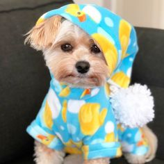 Dogs And Puppies Yorkie So Cute 29 Ideas Animals And Pets, Baby Animals, Cute Animals, Yorkie Dogs, Pet Dogs, Doggies, Yorkshire Terrier, Dog Pictures, Cute Pictures