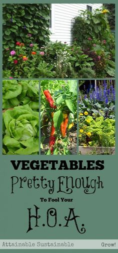 """Tired of your Home Owners Association telling you what you can grow in your yard? Here's my official """"how to thumb your nose at the board"""" advice. ;) There are so many vegetables that are pretty enough for your front yard garden and and edible garden."""