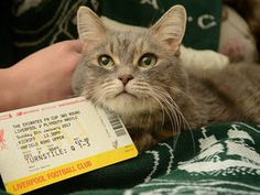 A FOOTIE-MAD family who went to watch their beloved Plymouth Argyle take on giants Liverpool took their sick cat with them - because the pet was too sick to be home alone.