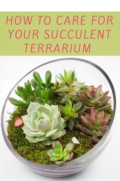 How to take care of your succulent terrarium