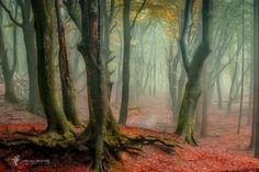 A Misty Invitation by Lars van de Goor on 500px