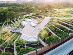 Thammasat University - Google Search Landscape Architecture Drawing, Eco Architecture, Concept Architecture, Contemporary Architecture, Terraced Landscaping, Modern Landscaping, Urban Agriculture, Urban Farming, Urban Landscape