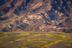 Day 328  From the Death Valley superbloom last month