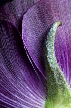 gorgeous  #purple #flower