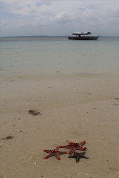 Isla de Zanzíbar en Tanzania. Visita mis aventuras y más fotografías en mi web: https://unachicatrotamundos.wordpress.com/2016/07/31/stone-town-y-prison-island/