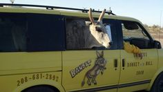 Donkey and Bull show star from Bouse, AZ  The show happens on Thursdays at 2pm