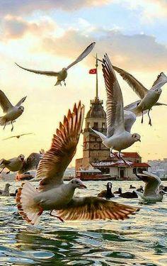 10 erstaunliche Fotos von Istanbul – baskı sanatı – Join the world of pin Beautiful Birds, Beautiful World, Beautiful Places, Beautiful Pictures, Nature Pictures, Turkey Travel, Tier Fotos, Belle Photo, Pet Birds