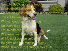When God made Beagles..