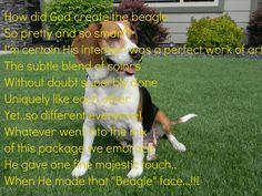 When God made Beagles..