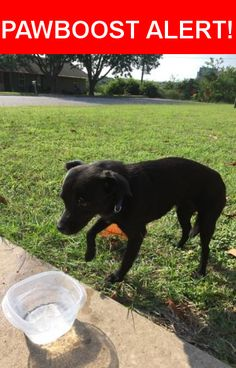 Is this your lost pet? Found in Round Rock, TX 78664. Please spread the word so we can find the owner!  Black puppy  Near Surrey Dr & Dover Ln