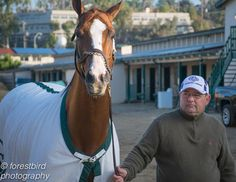 Catch up with newly-crowned Horse of the Year California Chrome with our latest photoblog!