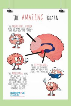 The Amazing Brain Poster - Megan Daniel - The Amazing Brain Poster When kids understand how their brain works, they're better able to self-regulate and understand that their brain controls their behavior, and that they can control their brain. Brain Science, Brain Gym, Brain Yoga, Fun Brain, Life Science, Computer Science, Counseling Activities, Therapy Activities, Stem Activities