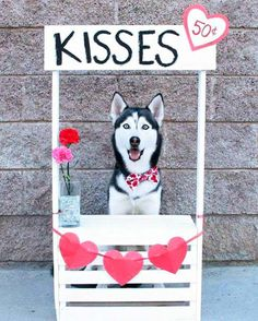doggie kissing booth | 35 Funny Pic to Weird Up Your Dismal Day | Team Jimmy Joe