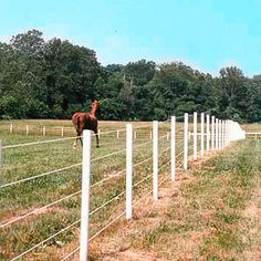 An electric fence can be a useful tool for teaching horses to respect their boundaries, and our Pro-Tek Rope can help with this. Rope Fence, Diy Fence, Fence Gate, Electric Fencing For Horses, Horse Fencing, Fences Alternative, Horse Paddock, Horse Barn Plans, Dream Barn