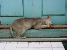 This image of a cat-napping feline in Mandalay, Myanmar, grabbed Photo of the Week honors.