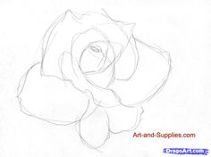 how to draw a rose in pencil step 2