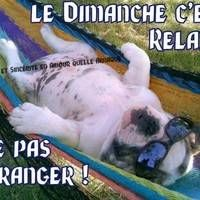 Le Dimanche c'est relaxe. Ne... Dog Days, Puppy Love, Puppies, Dogs, Summer, Animals, Funny Things, Sunday, Cookies