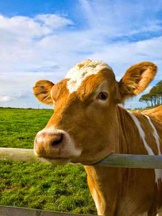 be healthy-page: The Truth About Grassfed Beef
