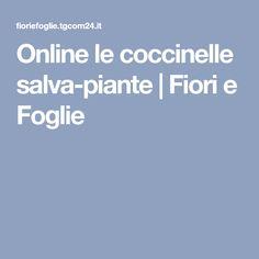 Online le coccinelle salva-piante | Fiori e Foglie