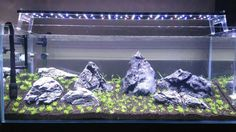 Grey rock stones in new setup with led aquarium lighting