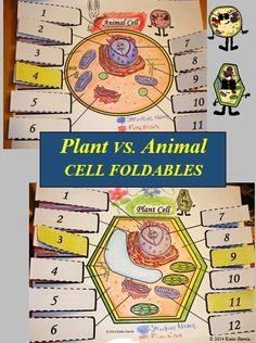 Animal and Plant Cells