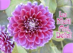 Succulents, Birthday, Garden, Plants, Birthdays, Garten, Lawn And Garden, Succulent Plants, Gardens