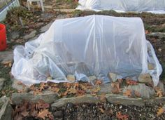 How to cover plants in the garden for an extended harvest in colder months. Row Covers, Bamboo Poles, Old Farmers Almanac, Cold Frame, Gardening Tips, Vegetable Gardening, Outdoor Plants, Low Lights, Harvest