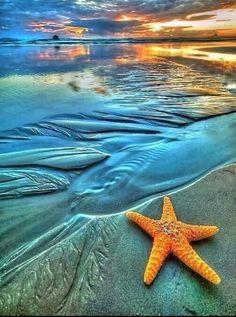 Have a starfish in aquarium