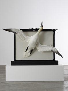 Dorothy Cross Taxidermy, Birds, Sculpture, Animals, Artists, Sea, Plants, Art, Animales