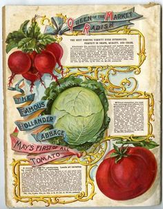 Vegetables Adorned The Back Cover Of 1899 L May Farm And Fl Guide Mouthwatering